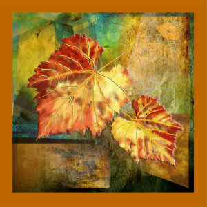 Grape Leaves in Fall